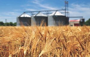 SA Government help fund plans for straw fuelled power plant