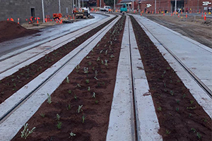 Flowering tram tracks and tenders for landscaping part of $42M City of Melbourne project